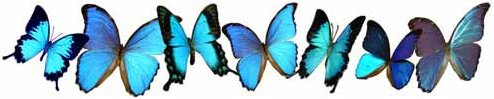 butterflys.png